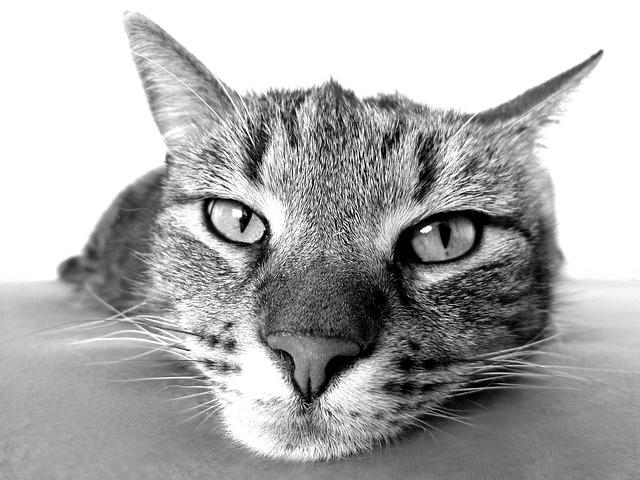 Kedi Hakkında Bilgiler