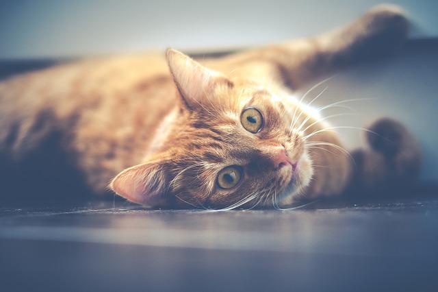 kedi hakkında