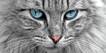 Kedilerinin Vahşi Yaşamları