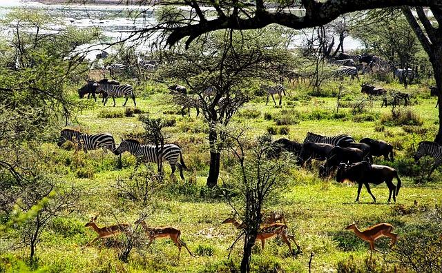 Tanzanya Doğal Kaynakları Hakkında