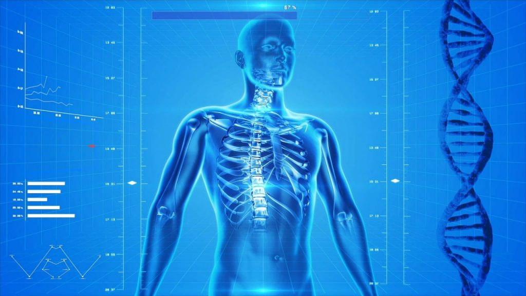 İnsan Vücudu Temsili