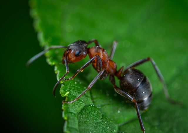 Karıncalar Hakkında İlginç Bilgiler