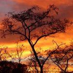 Akasya Bitkisi Hakkında Doğadan Bilgiler
