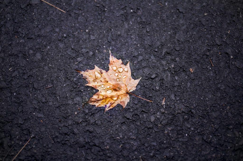 Toprağa Düşmüş Akçaağaç Yaprağı