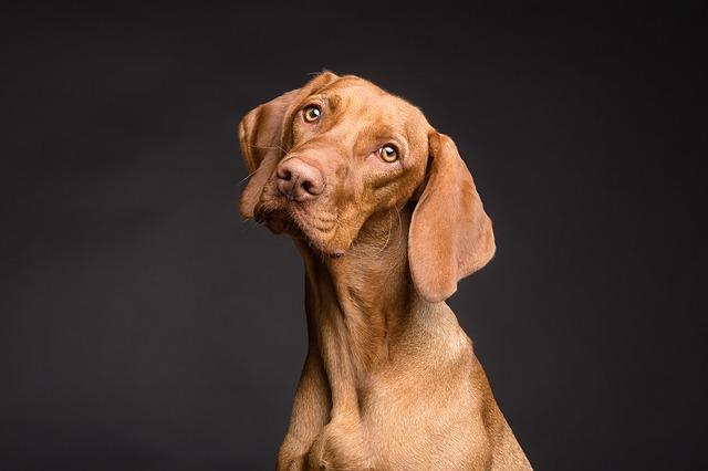 Köpek Cinsleri Hakkında Ne Kadar Bilgilisin ?