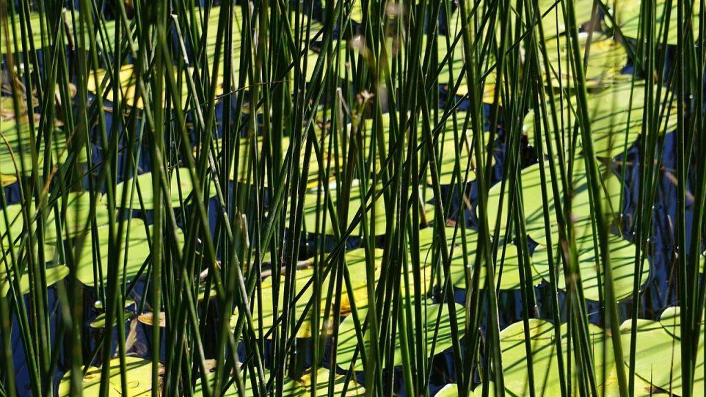Abant Gölü Bitki Örtüsü ve Yaşamı