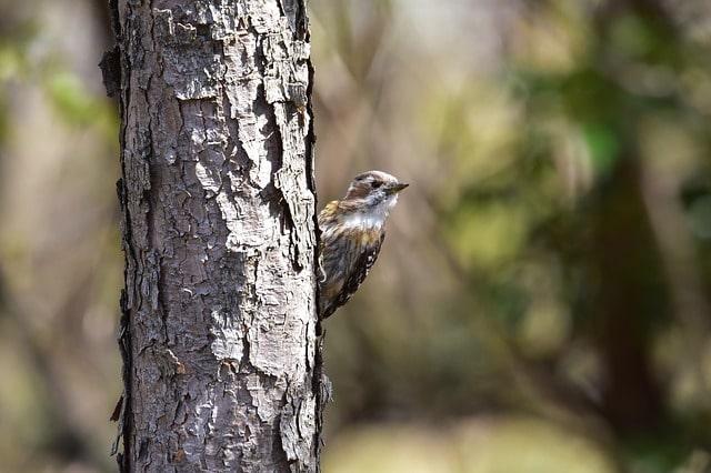 Ağaçkakan Kuşları ve Özellikleri