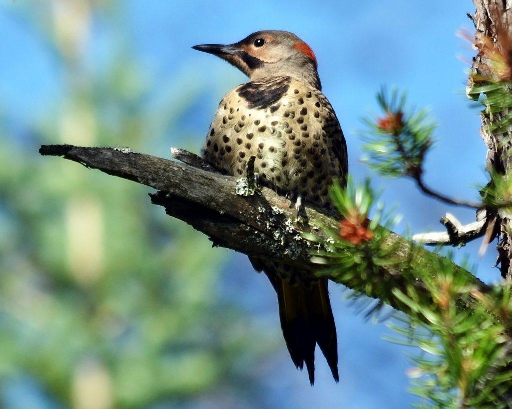 Ağaçkakanlar Hakkında Kuş Bilgileri