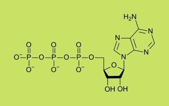 Adenozin Trifosfat (ATP) Hakkında Bilimsel Bilgiler